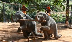 elephant1_s.jpg