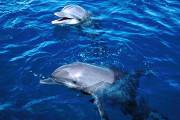 catamaran-dolphin_s.jpg