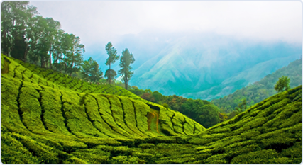 india-resort-2.jpg