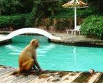 monkey2_s.jpg