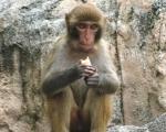 monkey_s.jpg